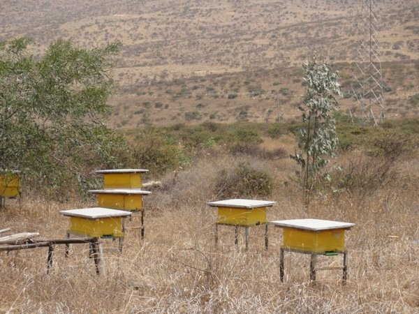 Some of the Asira Metira Monastry\'s beehouses