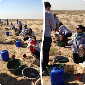 2 Planting Ghaf trees  Prosopis cineraria  in the desert of Kuwait for the Kuwait Great Green Wall