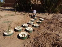 Planting in the Saharan Desert