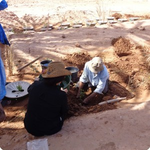 38. Making planting holes in Zaouia