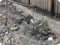 3 Growboxx plant cocoon in Gurgeon India along street planted in garbage dump