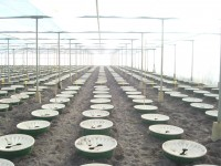 Growing vegetables in Elshout