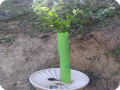 35. 20180619 A Waterboxx with a lemon tree that is already using 2 growsafes after a few months