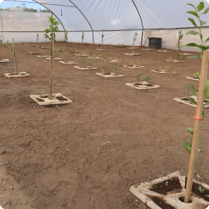10 Growboxx plant cocoon Ensenada Mexico planted with trees  together with vegetables or with vegetables only April 24 2018