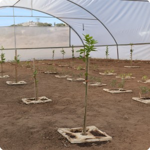 12 Growboxx plant cocoon Ensenada Mexico planted with trees  together with vegetables or with vegetables only April 24 2018