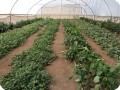 20 Growboxx plant cocoon Ensenada Mexico in a simple plastic tunnel with trees in combination with vegetbales   or with vegetables only July 24 2018