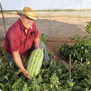 45 August 10   Mr. Jose Gpe Gastellum   technical Director of Groasis Mexico with a giant water melon grown together with a lemon tree