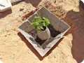 10 The Growboxx plant cocoon while installing