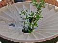 13 The Waterboxx plant cocoon after installing