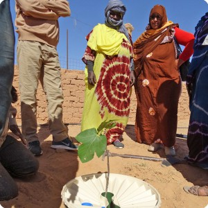 14 Now the tree has to start growing with the help of the Waterboxx plant cocoon
