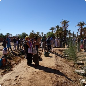 Groasis waterboxx Treeplanting activity in wadi 4 and 5 in Oct 2017