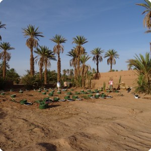 Wadi nr 1 2 and 3 Groasis Waterboxx ready for planting Oct 2016