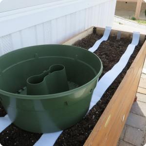 Grow lettuce in a water saving way