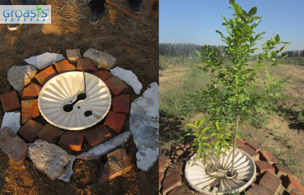 Beijing Huangfa Nursery and Waterboxx tree after one year   november 2013