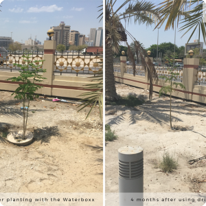 Difference between the Groasis Waterboxx and drip irrigation   4 months after planting in the drought of Bahrain 2
