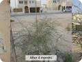 Plant in dry and eroded areas  like the UAE  and enjoy amazing results with Groasis