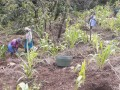 10. 20180219 Woman of Gonzalo are planting fruit trees and vegetables with the Waterboxx plant cocoon on this slope
