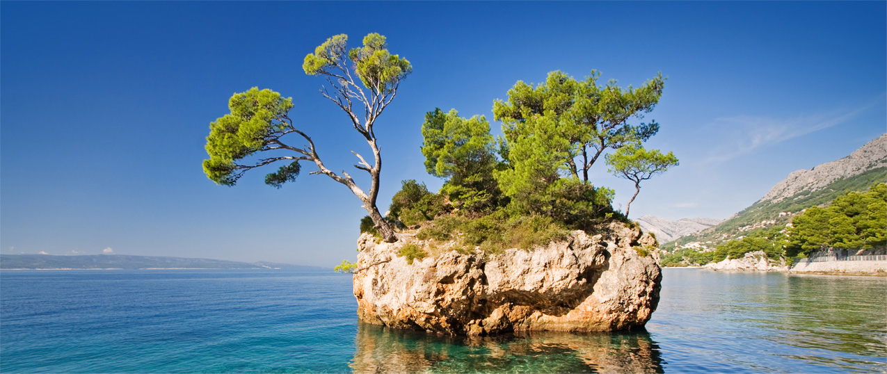 Trees can grow on rocks or stones, even by the sea with salty winds