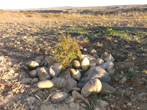 Hay and mulch covered with stones. These materials promote the development of the natural and biological life and increase the oxygen in the soil