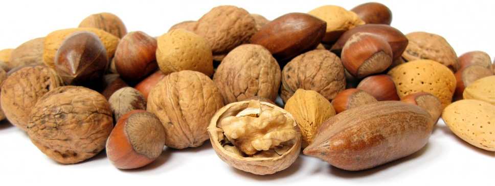 Nuts are an important food source for humans - growing nut trees can solve the food problem for humans