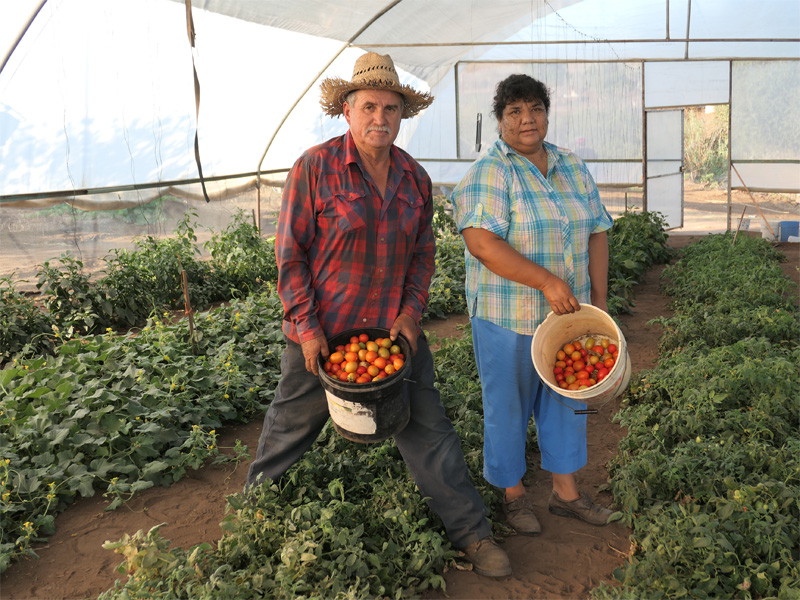 The Podesta Family with their tomatoes harvest of this morning from the Growboxx plant cocoon in Ensenada Mexico