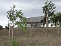 Agua vida y Naturaleza project in Ecuador while growing various fruit and vegetable species