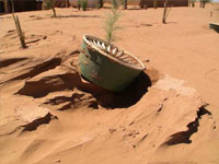 Planting trees in the Saharan Desert in Morocco