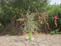 Support the growth of your tree with the Growsafe Telescoprotexx in Dubai
