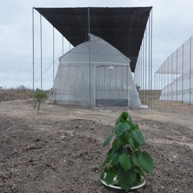 Planting trees in a water efficient way in Ecuador with the intelligent bucket 'Waterboxx plant cocoon'