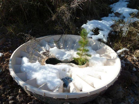 Planting trees in the winter - with the Growboxx or Waterboxx it is possible