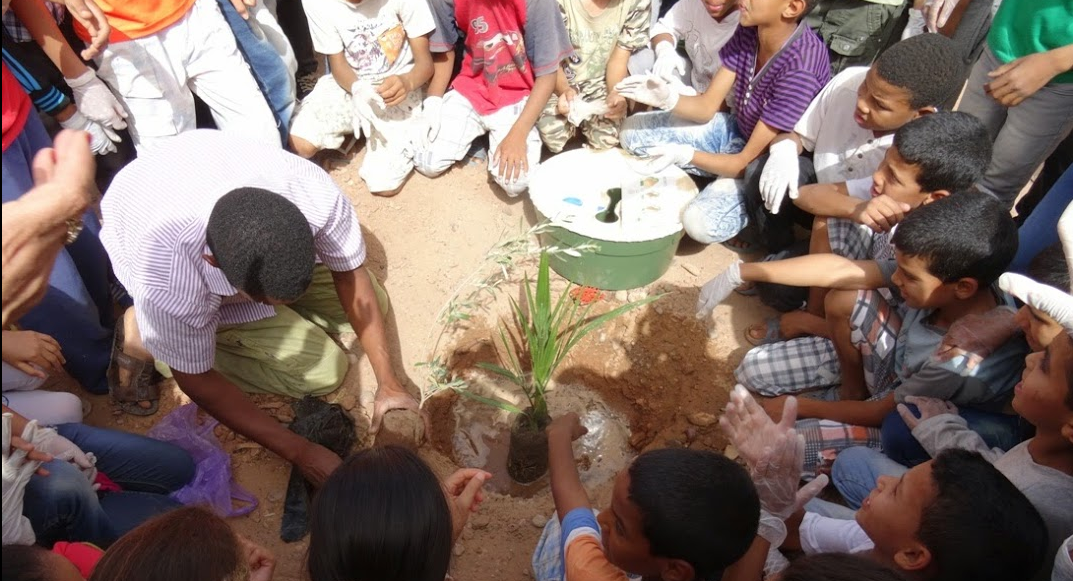 Planting trees in the sahara desert with the sahara roots foundation