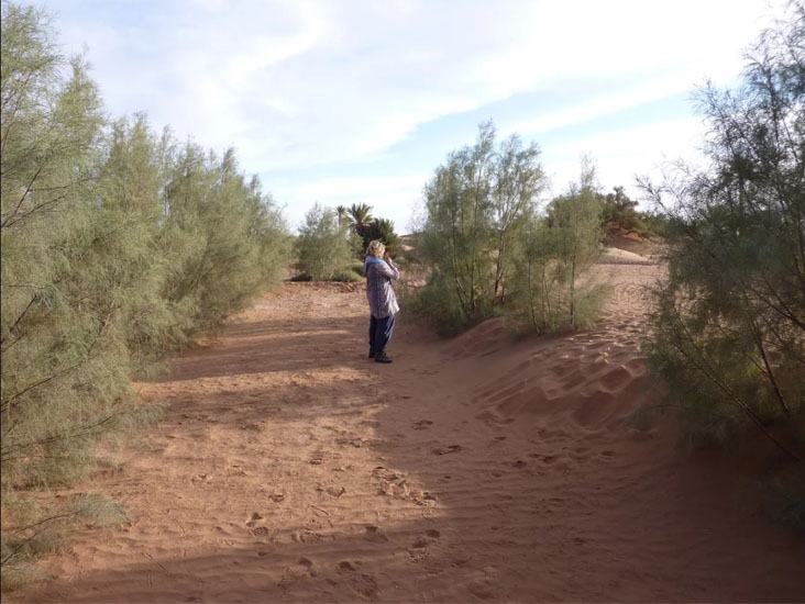 the sahara roots foundation fighting desertification in the sahara desert