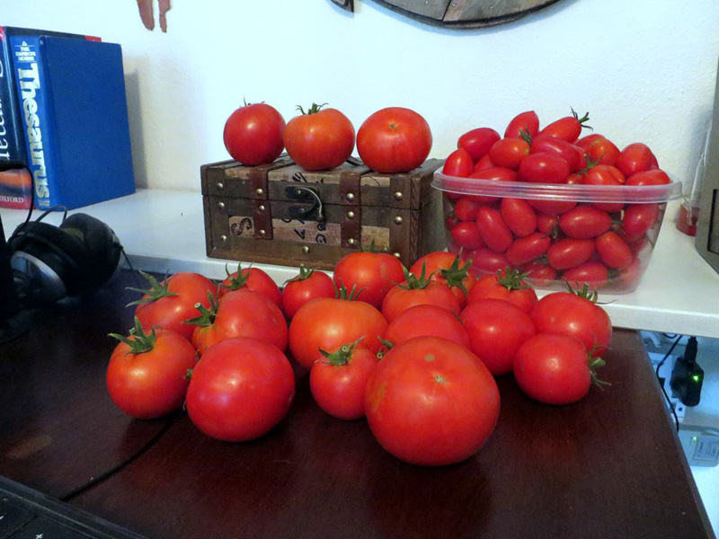 13. 20170727 All this harvest is from the same day from two plants that have been growing in the Waterboxx plant cocoon. 20 Big Beef tomatoes and 100 Juliets in the container