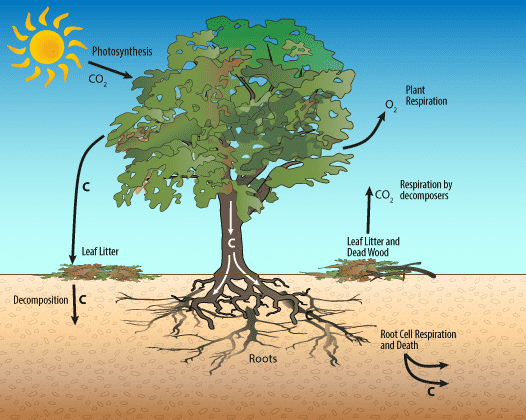 co2-disconnecting-with-trees-min.png