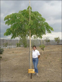 Plant trees in Ecuador without using irrigation systems and save money with the Waterboxx plant cocoon