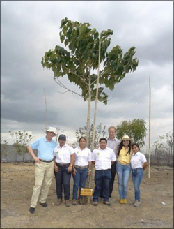 Plant trees in Ecuador without irrigation systems and save money on electricity and water - use the Waterboxx plant cocoon