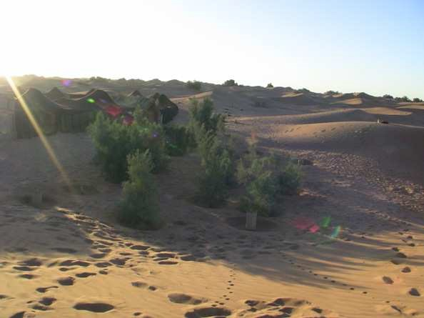 Planting trees with a high survival rate and less water in the Sahara desert with the Waterboxx plant cocoon