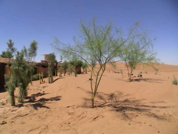 Planting trees in the summer in the Sahara desert - it is possible with the Waterboxx plant cocoon
