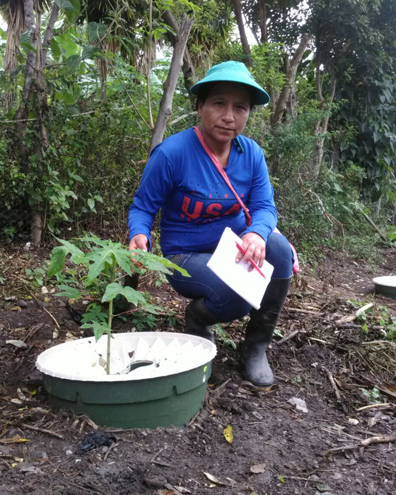 Sandra Quinonez leader of Tarabita 1 with her papaya 20180426
