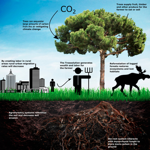 How does CO2 works in combination with trees?