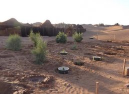 12 - April 2012 - Tamarisk Trees of 1.5 years old and newly planted