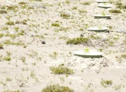 The trees have been planted in desert like circumstances on 2,800 meter high (8,400 feet)