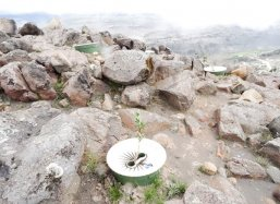 Groasis Waterboxx plantcocoon® is succesful on the rocks