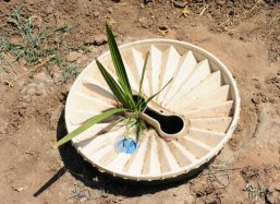 Detail of date palm in Groasis Waterboxx plantcocoon®