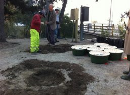 Preparing the planting holes in the rocky soil with a pick stick