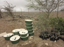 The trees and Waterboxx plantcocoons® are ready to plant this is a historical day as the biodiversity restoration of Dhofar Province starts