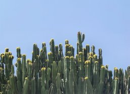 CO2 unbinding machine, cactus in Morocco