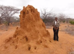 Termite hill three meters high
