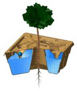 0B Transparant view of Growboxx plant ocoon with tree not combined with vegetables or plants or bushes