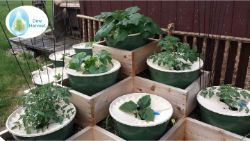 2 Groasis Waterboxx city farming garden pyramid one month after planting